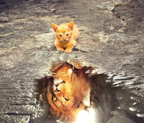 cat-3809563_960_720.jpg