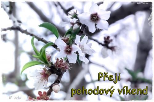 flowers-6022681_960_720.jpg