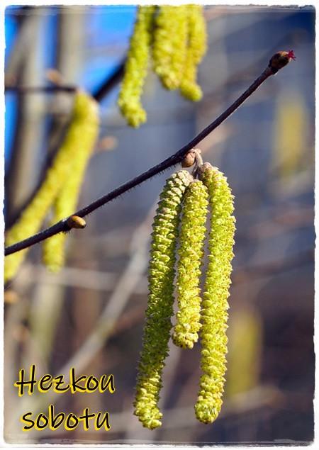 hazelnut-6059322_960_720.jpg