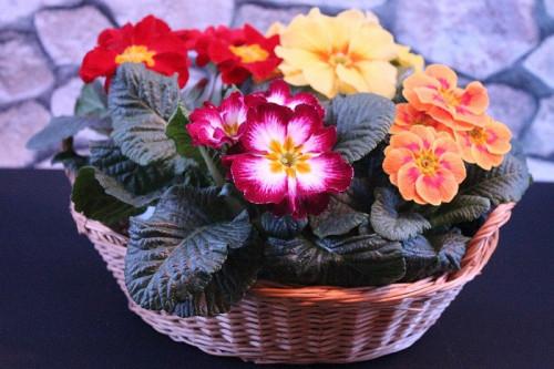 flowers-4771722_960_720.jpg