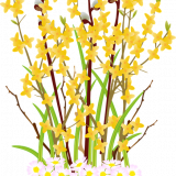 flowers-6084508_960_720.png