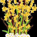 flowers-6084508_960_720
