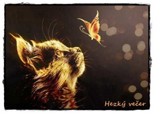 cat-5896987_960_720.jpg