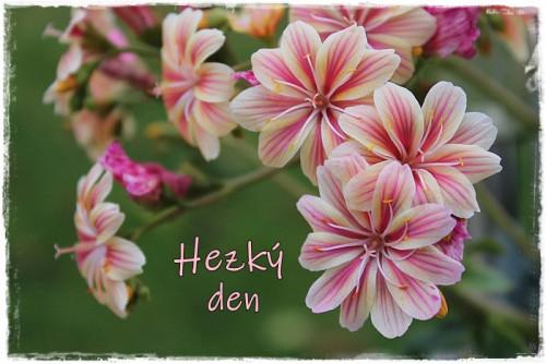 houseleek-5887261_960_720.jpg