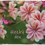 houseleek-5887261_960_720
