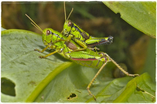 insect-6090504_960_720.jpg