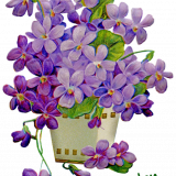flowers-5973940_960_720.png
