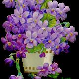 flowers-5973940_960_720