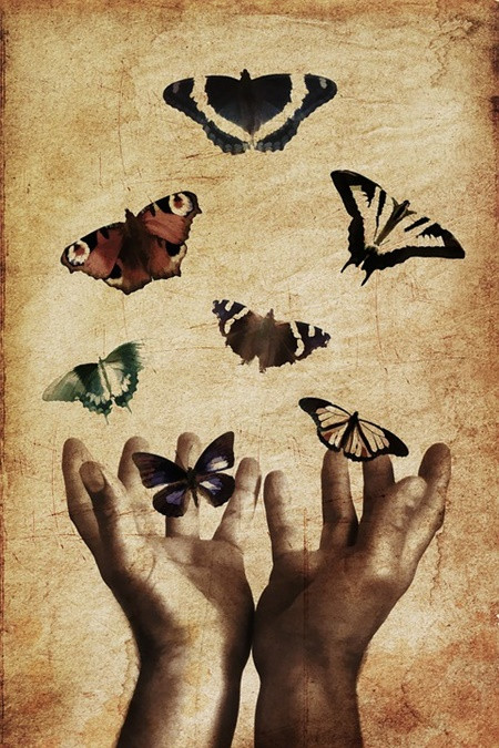 butterflies-843298_960_720.jpg