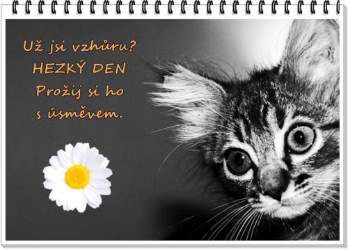 cat 2301731 960 720