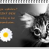 cat-2301731_960_720