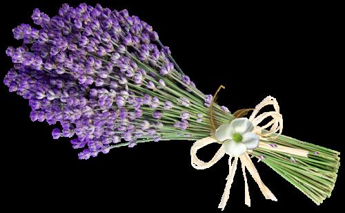 lavender-6109000_960_720.png