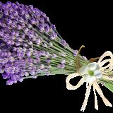 lavender-6109000_960_720
