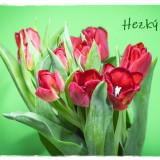 tulips-6128555_960_720