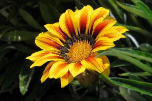 flower-6122698_960_720.jpg