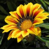 flower-6122698_960_720