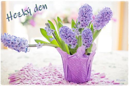 hyacinth 4110726 960 720