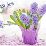 hyacinth-4110726_960_720