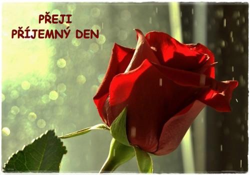 roses-6154156_960_720.jpg