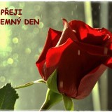 roses-6154156_960_720