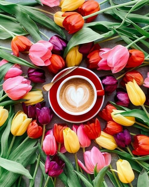 cerveny salek s podsalkem,kava,tulipany