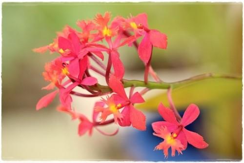 orchid-6171995_960_720.jpg