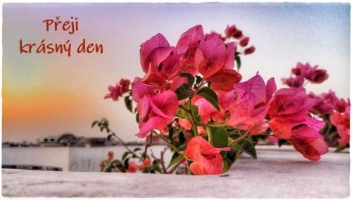 flower-6176507_960_720.jpg