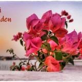 flower-6176507_960_720