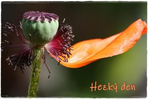 poppy-6171989_960_720.jpg