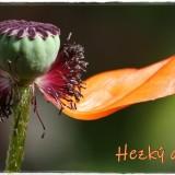 poppy-6171989_960_720