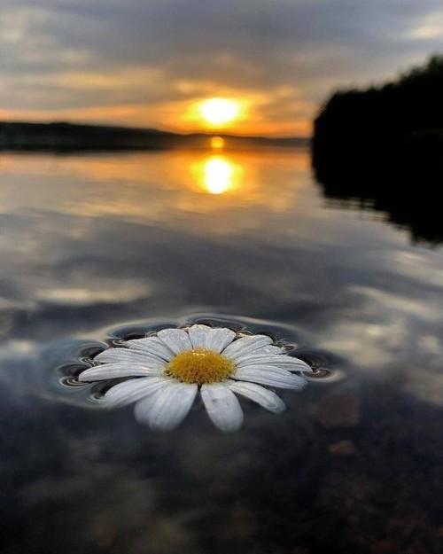 photo---nature.jpg