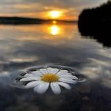photo---nature