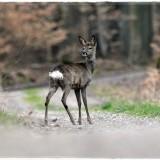 deer-6201214_960_720