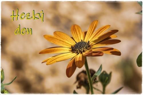 flower-6148254_960_720.jpg