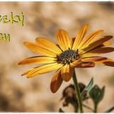 flower-6148254_960_720