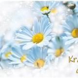 daisy-6161880_960_720