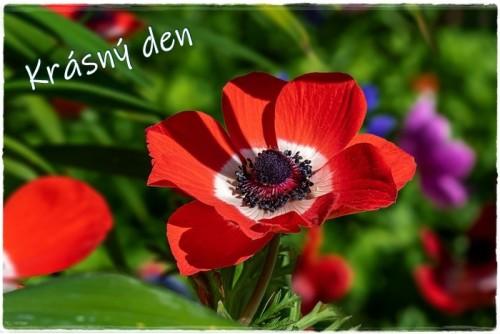 flower-6170655_960_720.jpg