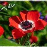 flower-6170655_960_720