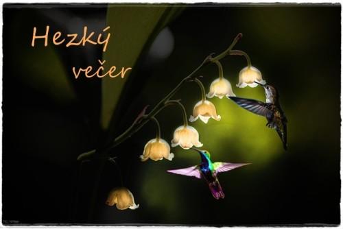 flowers-6232971_960_720.jpg