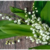 lily-of-the-valley-6270742_960_720
