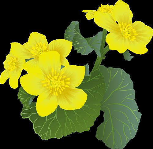 flowers 6273054 960 720
