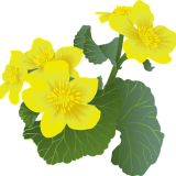 flowers-6273054_960_720.png