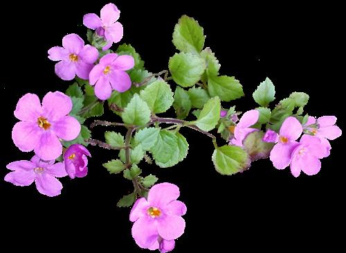 flower 2753991 960 720