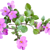 flower-2753991_960_720.png