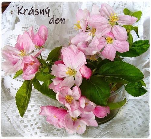 apple-blossom-57132_960_720.jpg