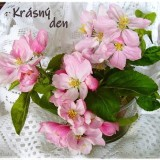apple-blossom-57132_960_720