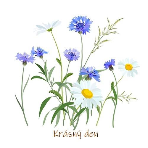flowers-2082492_960_720.jpg