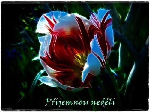 tulip-4771834_960_720.jpg