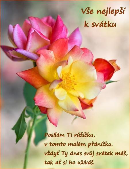 roses-5607636_960_720.jpg