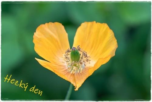 poppy-6339206_960_720.jpg